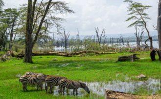 trona jane safari